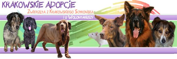 krakowskie_adopcje