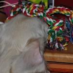 Egon kradnie przywiezione przez nas zabawki