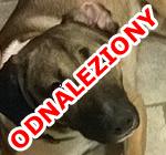 00_enzo