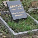 Cmentarz w Bytomiu 0851