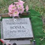 Cmentarz w Bytomiu 0854