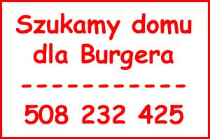 dom_dla-Burgera