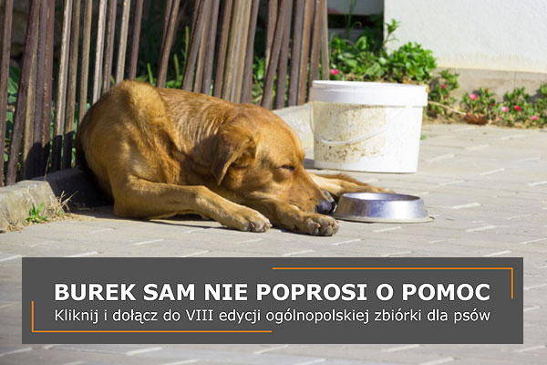top_burek
