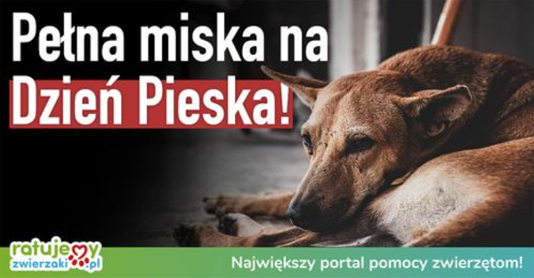 00_dzien_pieska